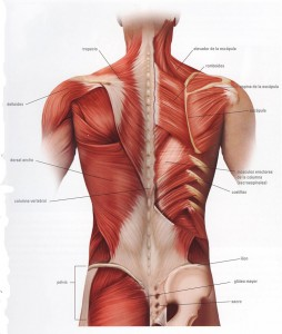 dolor espalda masaje pilates