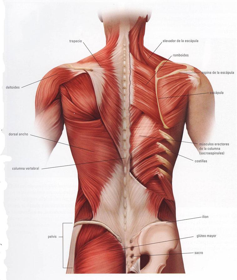 espalda masaje imagen: