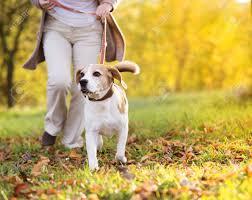 paseando perro